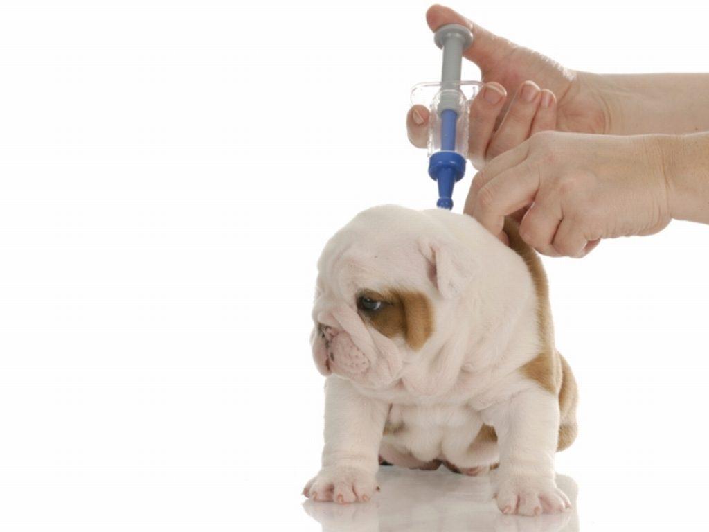 vacina-1024