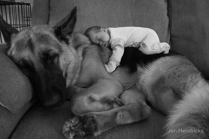 Bebê dormindo com cão pastor