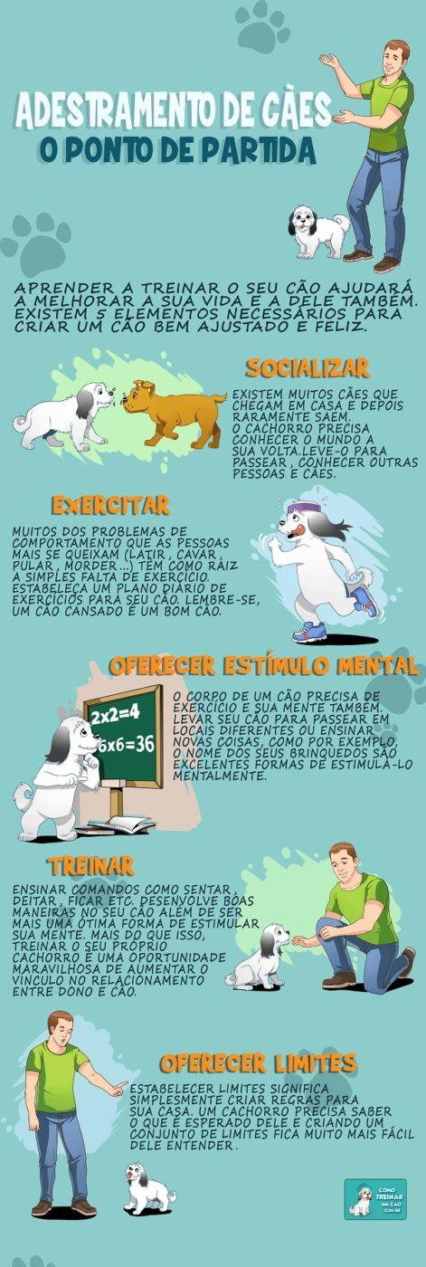 Como adestrar seu cachorro - Infográfico