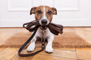 cama-caminha-cachorro-gato-pet-suspensa-cinco-passos-adestrar-seu-cao-adestramento