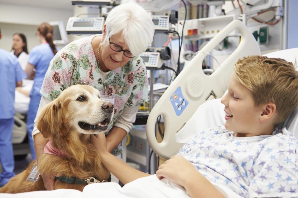 Cães Terapeutas