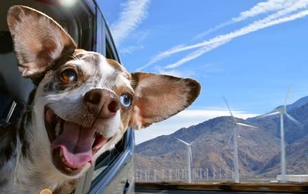 blog-cachorro-lassie-gato-carro