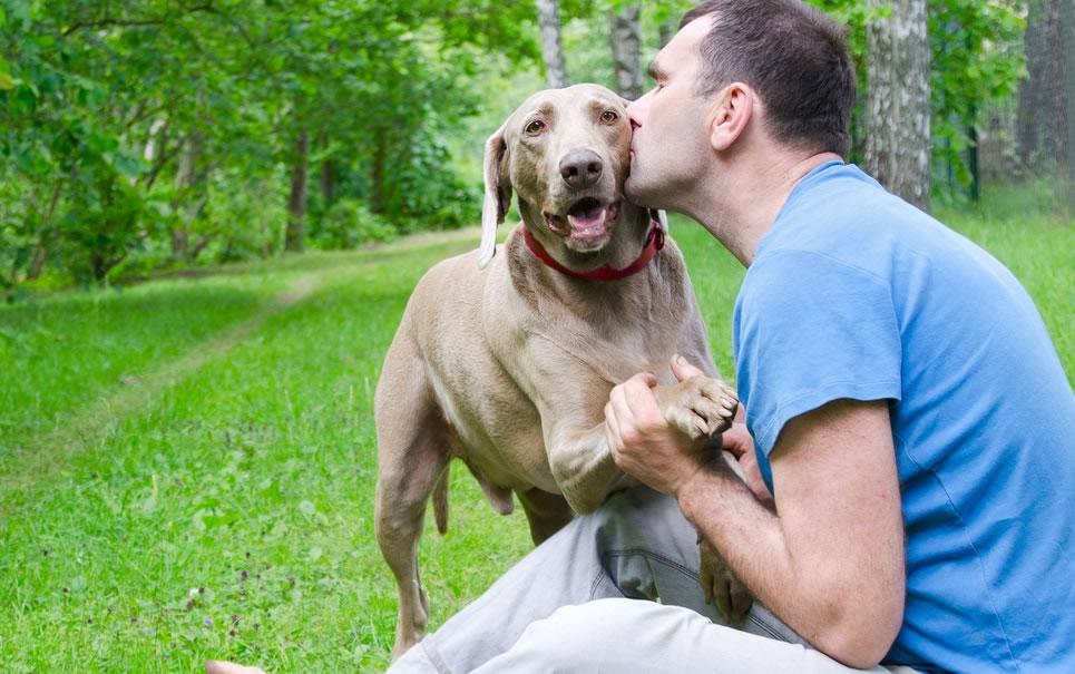 blog-pai-de-cachorro