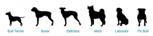 Caminha para Bull Terrier, Boxer, Dalmata, Akita, Labrador, Pit bull