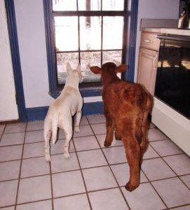 cama-cachorro-pet-gato-moonpie-mini-vaca-1