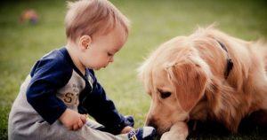 cama-pet-cachorro-gato-brandina-lassie-bebe-interagindo