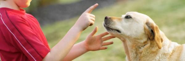 Apontar Para Pets