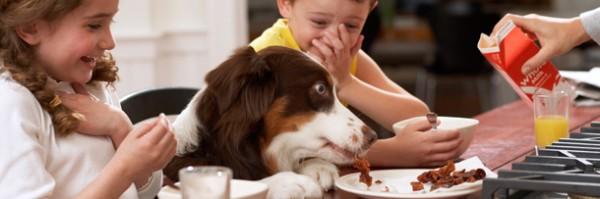 Pets Reconhecem Opiniões