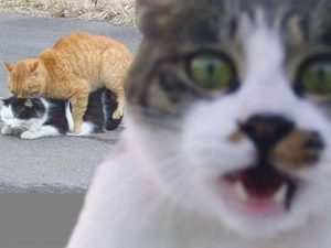 cama-suspensa-elevada-cachorro-gato-coelho-brandina-lassie-17