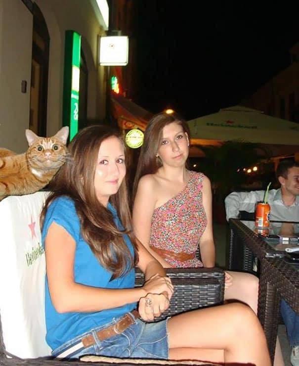 Gatos protagonistas