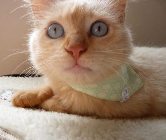 cama-suspensa-brandina-caminha-pet-cachorro-gato-2