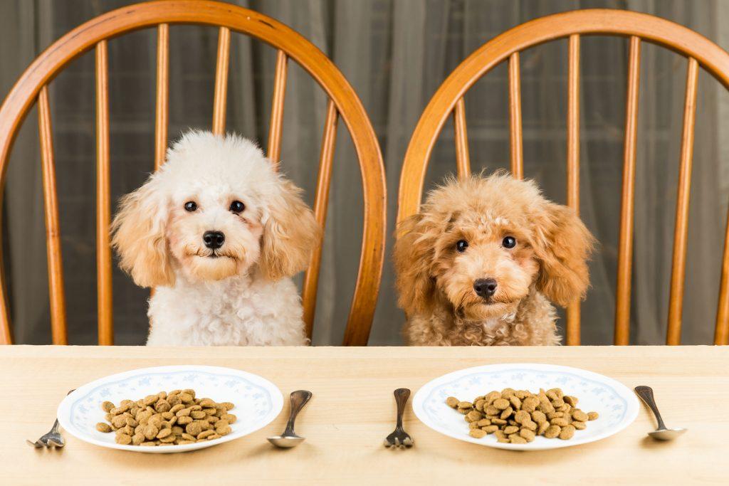 Comida para cachorro