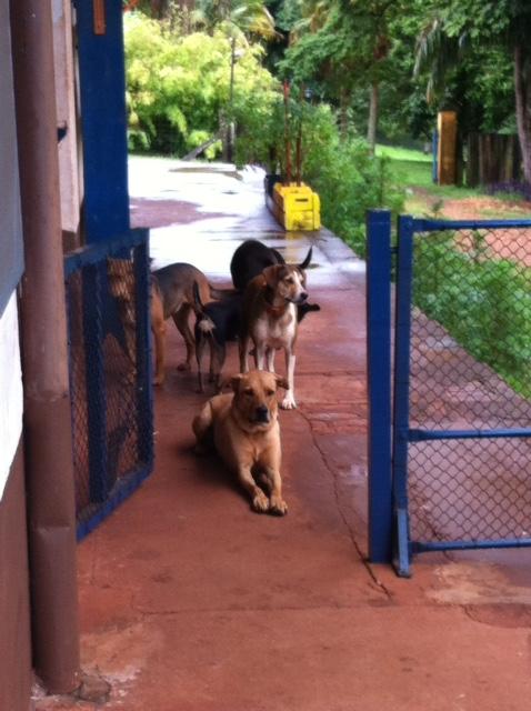 Limite saudável para os cães