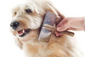 cama-pet-cachorro-gato-lassie-brandina-escova-pelos-pelagem-longa