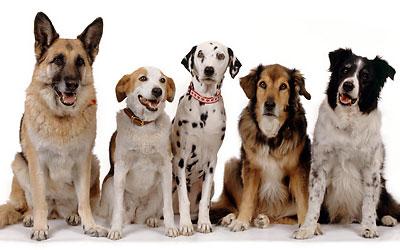 cama-pet-cachorro-gato-lassie-brandina-pelagem-canina-2