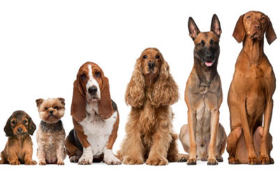 Diferentes tipo de pelagens dos cães