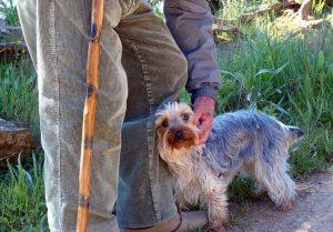 cama-pet-cachorro-gato-lassie-brandina-comportamento-canino-auto-ajuda-3