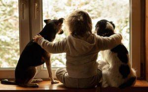 cama-pet-cachorro-gato-lassie-brandina-comportamento-canino-auto-ajuda-5