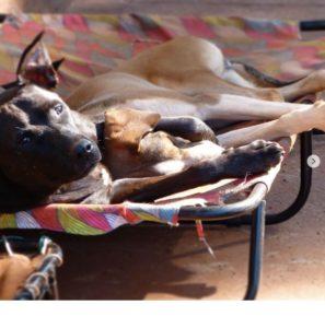 cama-brandina-pet-cachorro-gato-lassie-amelie-poulain-2