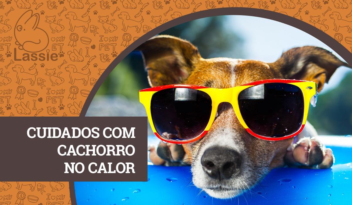 Cuidados com cachorro no calor