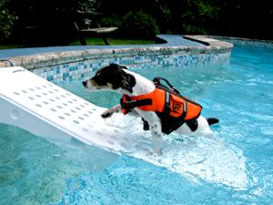 cachorro-piscina2