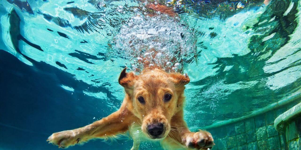Dicas para o seu pet aproveitar a piscina