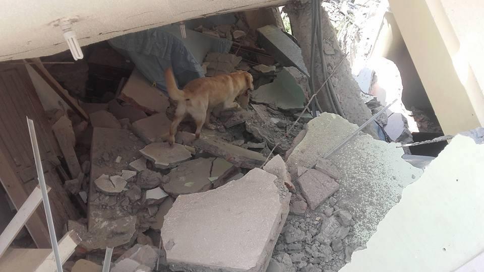 Cão de Resgate Labrador - Dayko