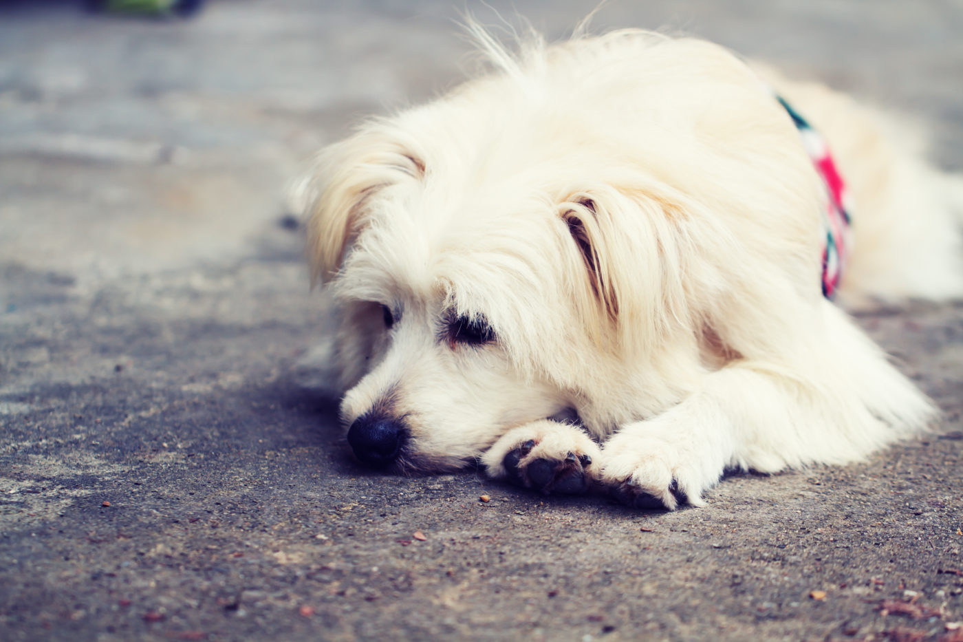 Dog lonely alone