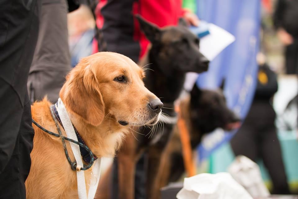 Treinamento do Cão de Resgate