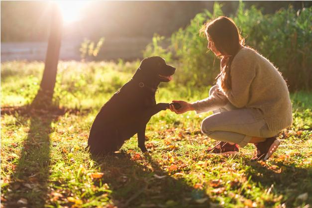 Os quatro motivos para adotar um Cachorro - companhia