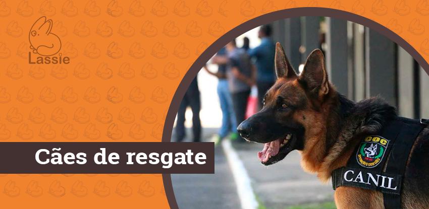 Card Blog Cães de resgate