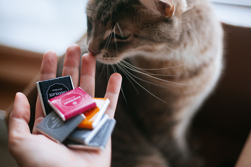 cats-should-never-eat-chocolate-poisoning-toxic-dangerous