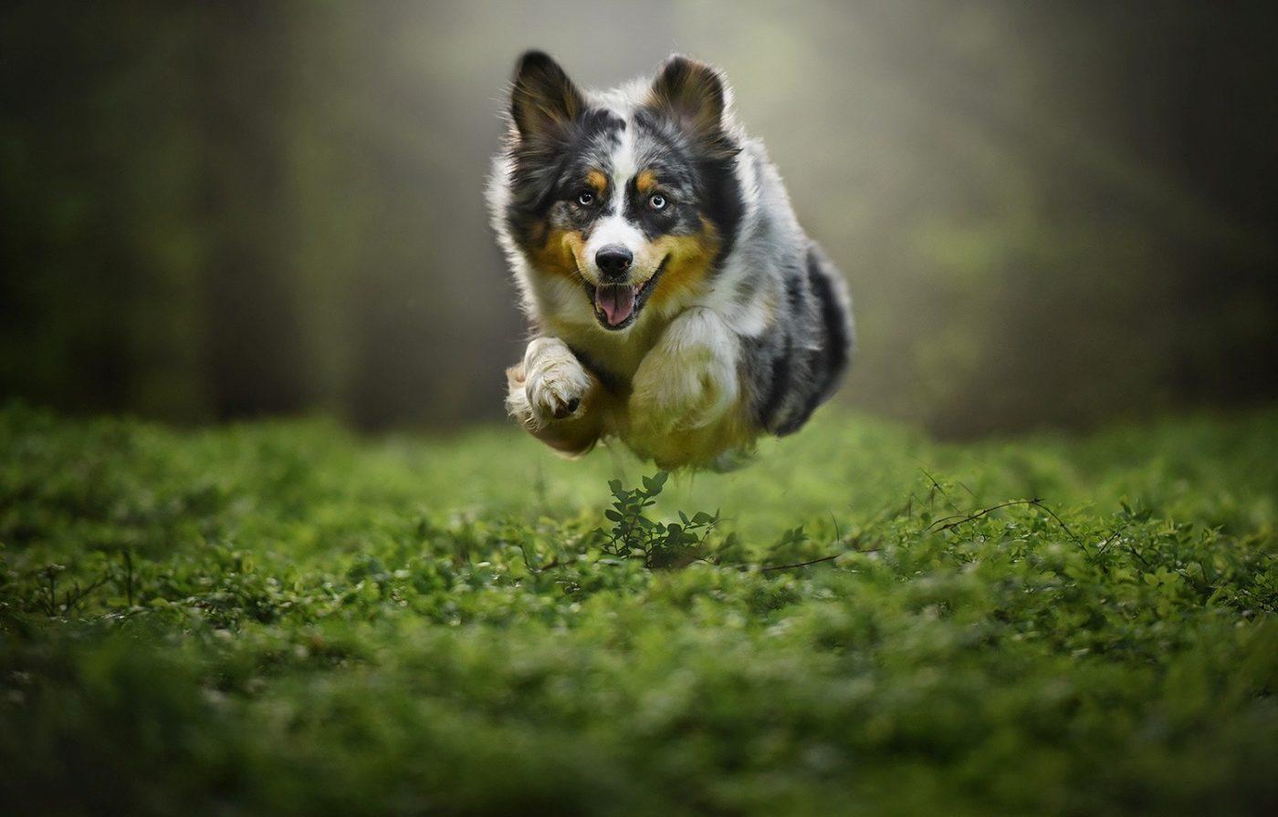 Articulações cães
