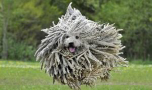 Dog-mop-564889