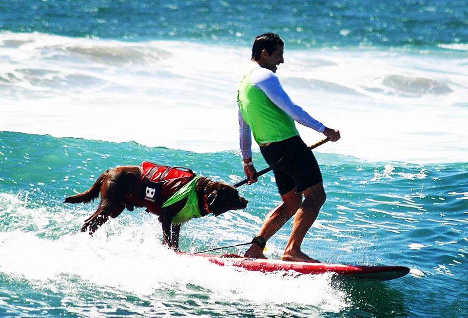 cao surfista