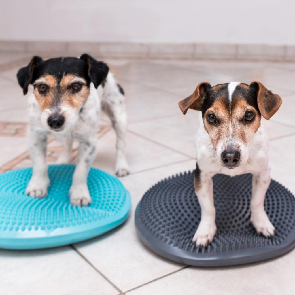 iStock-902080958-dogs-on-mats