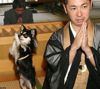 monk o cão
