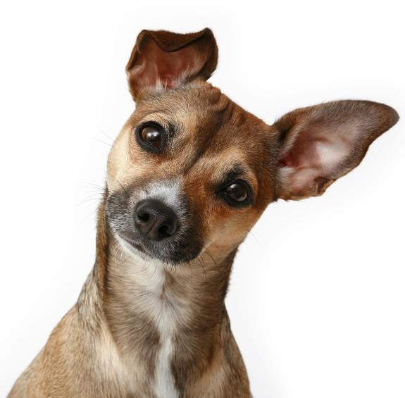 cachorro-curioso-2