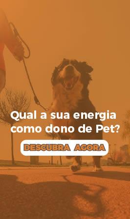 quiz-energia-cachorro-widget