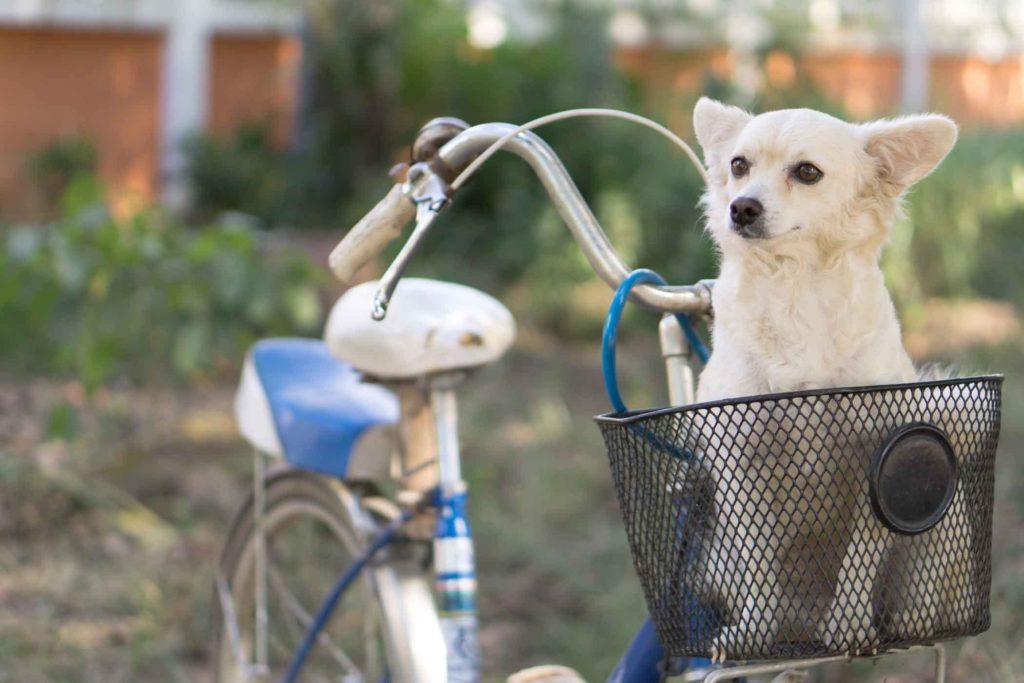 5-dicas-bicicleta-lassie-02
