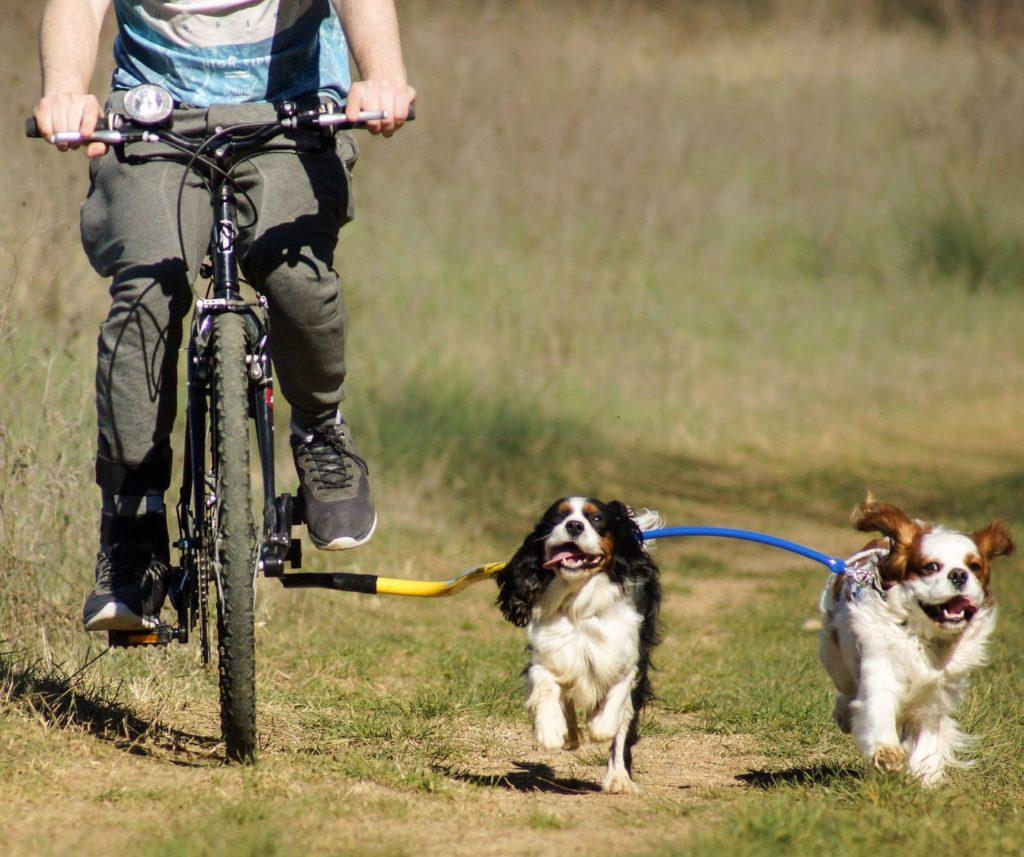 5-dicas-bicicleta-lassie-07