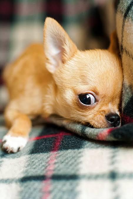 Cuidados durante o sono do cachorro