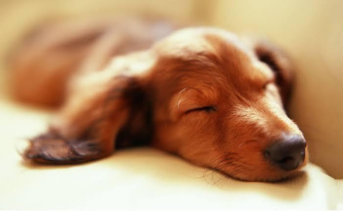 Quantidade de Horas de Sono do Cachorro