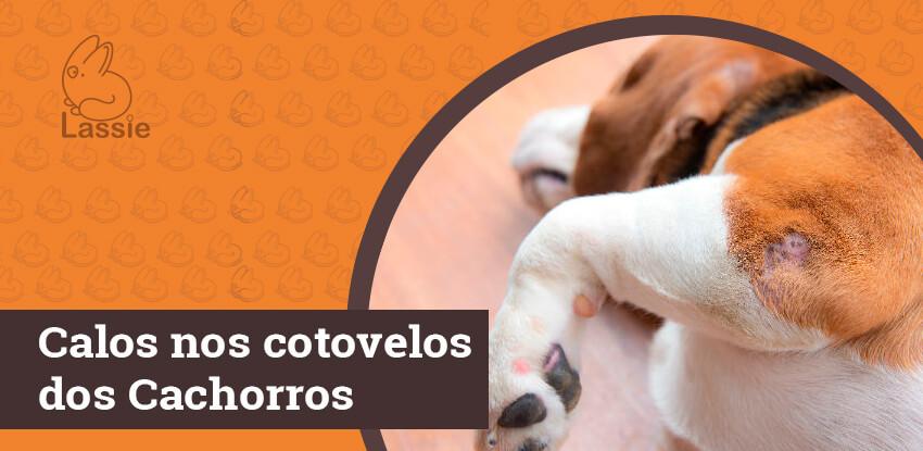 Hiperqueratose - Calos nos cotovelos dos cachorros