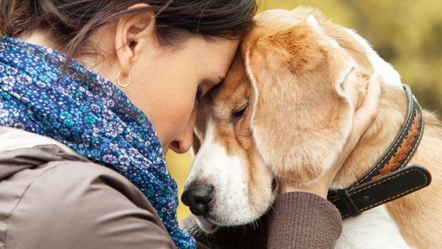 Carinho e atenção podem minimizar os uivos do cão