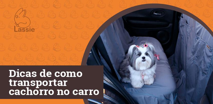 Dicas de como transportar cachorro no carro