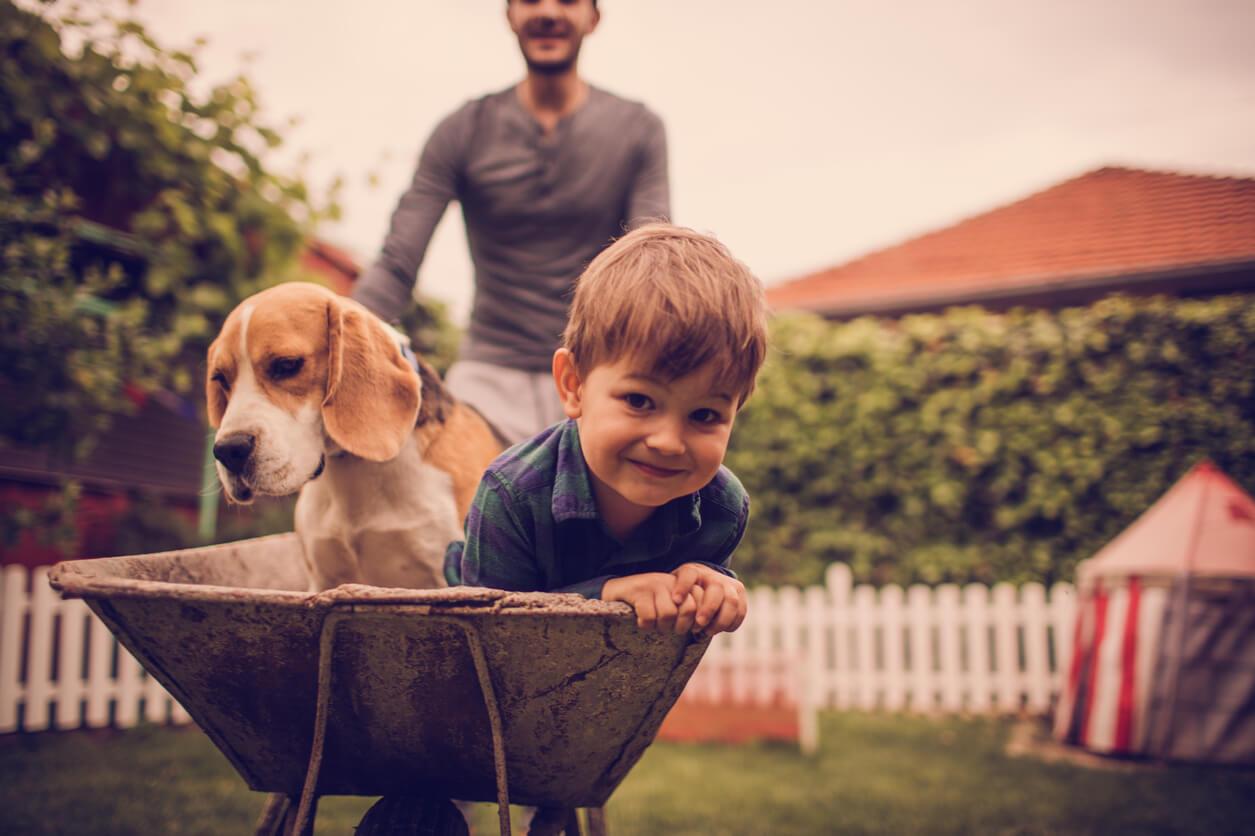 Melhores raças de cachorro para crianças: Beagle