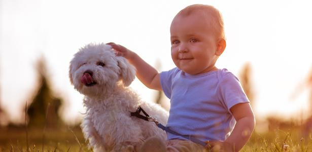 Cães da raça poodle gostam de crianças