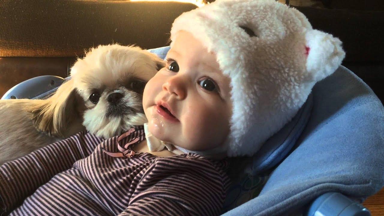 Shih Tzu com crianças pequenas