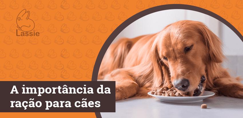 A importância da ração para cães